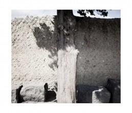 Pompei - napols - napoli - vesuvio - rovine - turist - albero