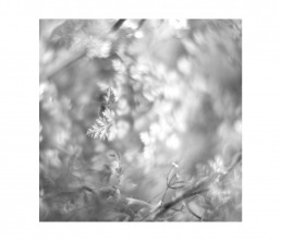 botany - aromatiche- black and white - macro photography