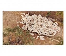 regaleali - sheep - sicily